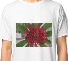 Waratah 1 Classic T-Shirt