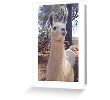 Llama 'Kipper' Greeting Card