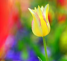 The color theory of Spring by Brian Bo Mei