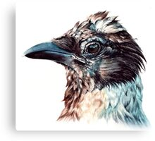 Hooded Crow Canvas Print
