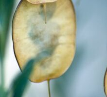 Seed Pods Sticker