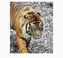Tiger, Dudley Zoo Classic T-Shirt
