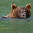 Grizzly Bear Swimming by WorldDesign