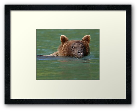 Grizzly Bear Swimming by Sheri L Gladish