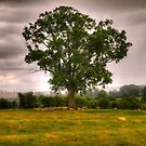 Sheep Take Shelter Under The Tree by SimplyScene