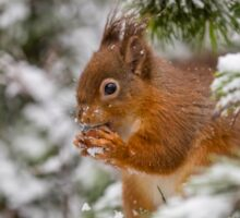 Red squirrel in Winter snow Sticker