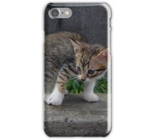 surprised kitten iPhone Case/Skin