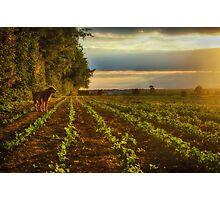 Walk in the Sun Photographic Print