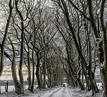 Winter Avenue by M.S. Photography/Art