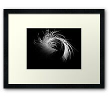 Feather on Black Framed Print
