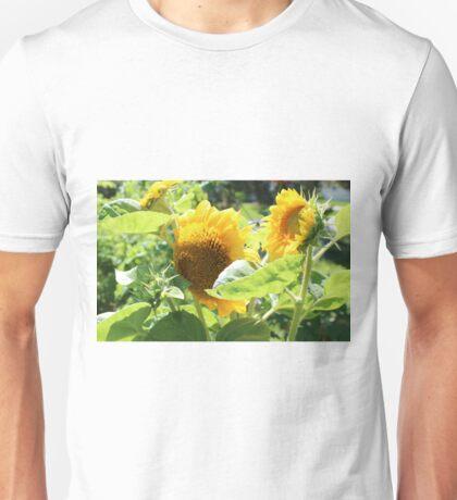 Heirloom Mammoth Sunflowers Unisex T-Shirt