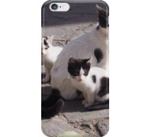 Stray Cats 2 iPhone Case/Skin