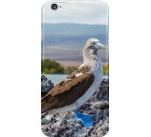 Blue-footed booby II iPhone Case/Skin