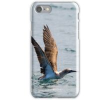 Blue-footed booby III iPhone Case/Skin