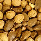 Mixed Nuts by Elizabeth  Lilja