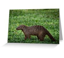 Banded mongoose Greeting Card