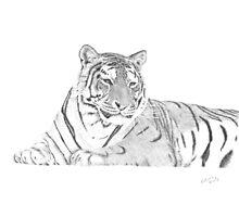 Zarina a Siberian Tiger Photographic Print