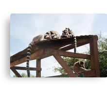 Sleeping Lemurs Canvas Print