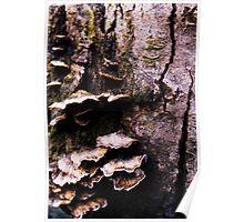 Fabulous Fungi Poster