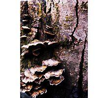 Fabulous Fungi Photographic Print