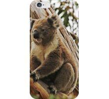 Backyard Koala iPhone Case/Skin