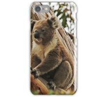Backyard Koala iPhone Case/Skin