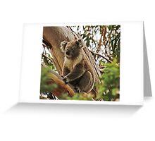 Backyard Koala Greeting Card