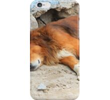 Sleeping Dog Next to a Wall iPhone Case/Skin