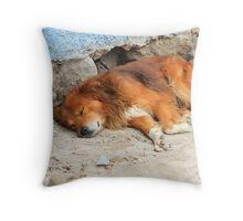 Sleeping Dog Next to a Wall Throw Pillow