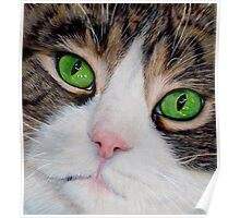 Bright Eyes ~ A Cat in Coloured Pencils Poster