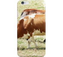 Cows in a Pasture iPhone Case/Skin