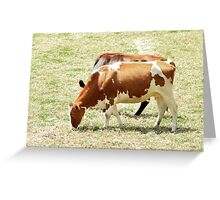 Cows in a Pasture Greeting Card