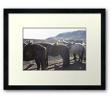 Icelandic Horses Framed Print
