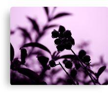 raindrops and hedge berries (purple) Canvas Print