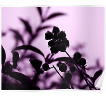 raindrops and hedge berries (purple) Poster