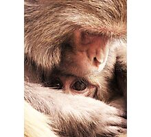 Monkey Temple Macaques Photographic Print