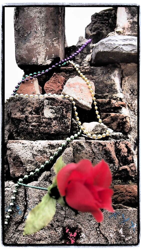 A Rose for Her Grave by Cyn Piromalli