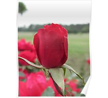 One In A Million Red Roses Poster
