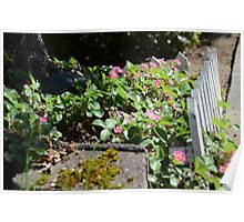 Tree garden box of flowers Poster
