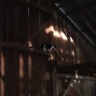 Ranch Cat in the Rafters by dogplay