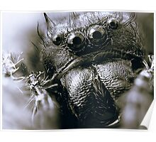 Those Crazy Jumping Spider Eyes Poster