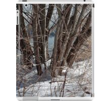 Winter by the pond iPad Case/Skin