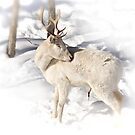 Albino White Tail Deer by Yannik Hay