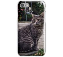 Lord Greystoke King of Cats iPhone Case/Skin