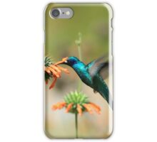 Hummingbird Collecting Nectar iPhone Case/Skin