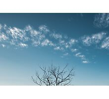 Lone tree in the Texas Sky Photographic Print