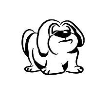 snooty dog Photographic Print
