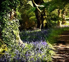Along the bluebell walk by Amar-Images