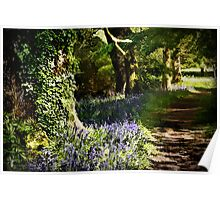 Along the bluebell walk Poster