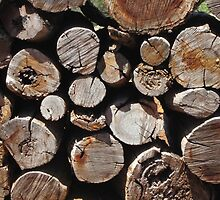 Wood by foxhill